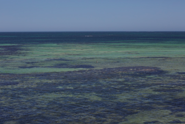 Indian Ocean Reef Greenhead Western Australia
