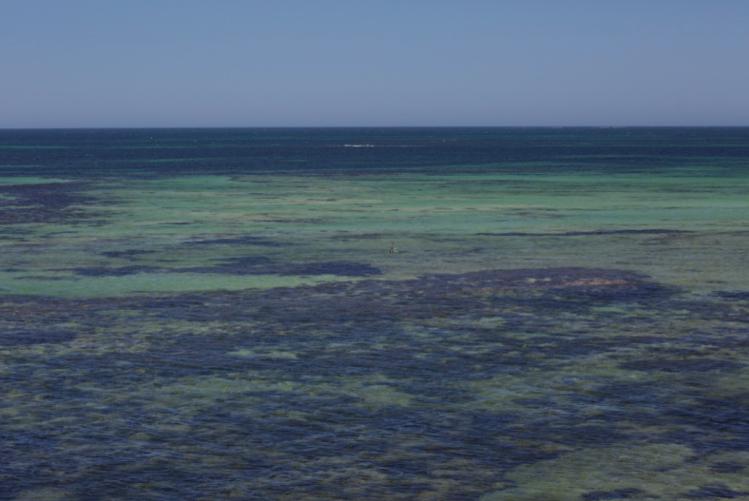 Indian Ocean Reef Greenhead Western Australia